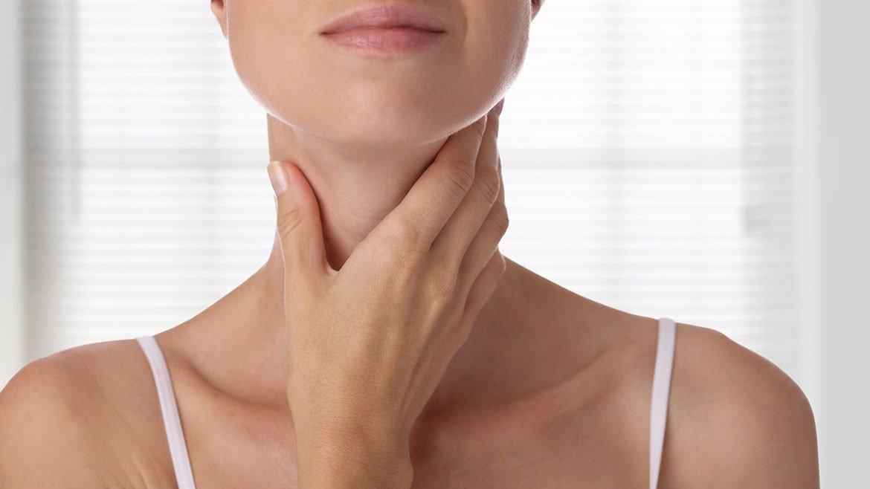 Строение и функция щитовидной железы